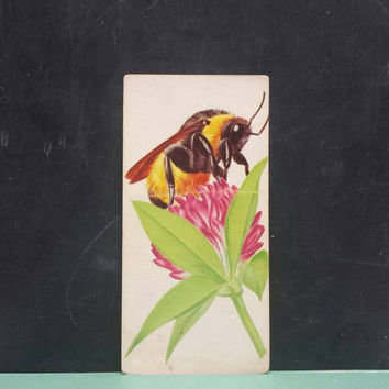Vintage Bumblebee Insect Flash Card Color Illustration Paper Ephemera Art Decor Nature Bug Collage Crafts Supply Bees