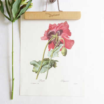 Vintage Print Poppy Red Book Plate Redoute Botanical Floral Art Wall Hanging Spring Summer French Script