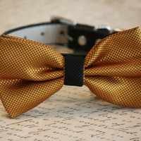 Gold and Black wedding Dog Bow Tie attached to collar, Chic Wedding