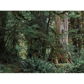 Where Forest Meets Magic, Fine Art Print - Many Sizes