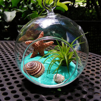 Caribbean Glass Globe Hanging Terrarium Kit with Tillandsia  Air Plant