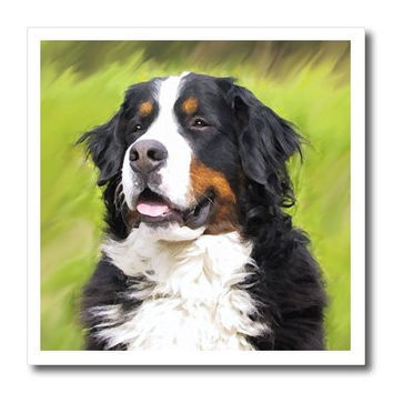 3drose Bernese Mountain Dog Iron on Heat Transfer Paper, 8 by 8-Inch