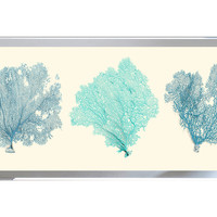 Sea Fan Panel I, Original Vintage Prints