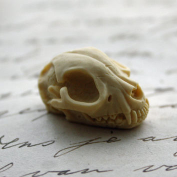 Cat Skull Cameo Cabs Resin Cabochon Taxidermy Animal Cameo Cat Steampunk Gothic Goth Skull Black Ivory 25x18mm 6 PIECES