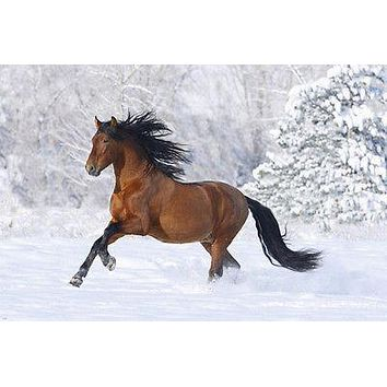 WILD HORSE RUNNING poster sleek muscled TAIL MANE beautiful POETIC 24X36
