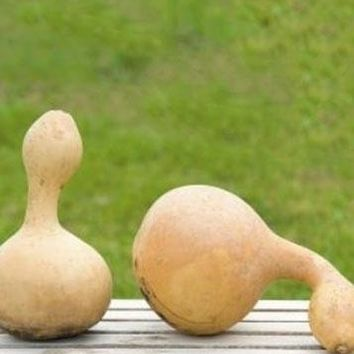 12 per Pack - Natural Autumn Gourds in Assorted Sizes
