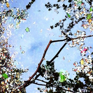 Petals and Twigs | Nature Photography | Abstract Photography | London | Sky | Flower Petals | Blue | Pink | White