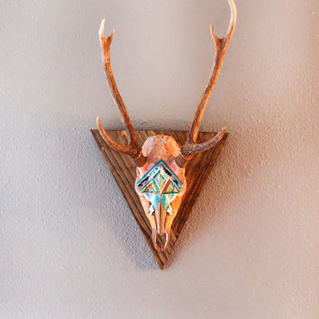 Painted Axis Deer Skull / Carmadilla European Mount / Southwest Art Decor