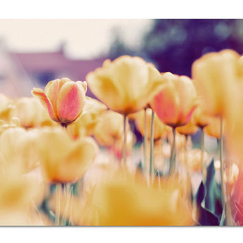 Nature Photograph, Field of Tulips, 8x10 Print, Fine Art Photo, Spring Flowers, Orange, Yellow, Apricot, Peach Colors