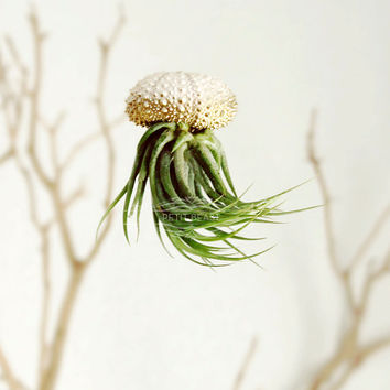 3 Gold OMBRE Jellyfish Air Plant // Sea Urchin Wedding Favor Decor Gift gradient house plant shell hanging art holiday ornament xmas