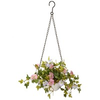 "9"" Morning Glory Plant Hanging Basket 