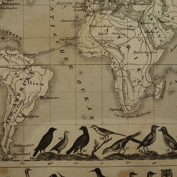 1849 old worldmap illustrated with birds - original antique world map - bird and fish migration Mercator projection vinatge maps 9x11 inch
