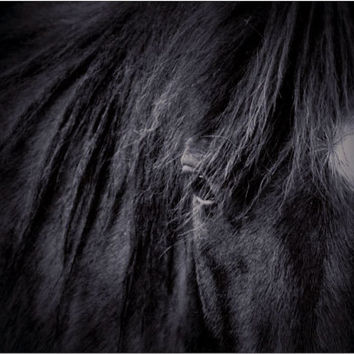 Horse Photography in Black and White - Black Horse Art Print Also Available on Canvas - 8x10 16x20 2x30 And More