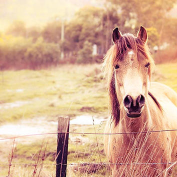 Horse photography equine pony photography fine art 8x10 8x12 nature photography countryside photography vintage cream gold sepia horse photo
