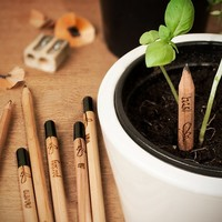 Sprout Pencils at Firebox.com