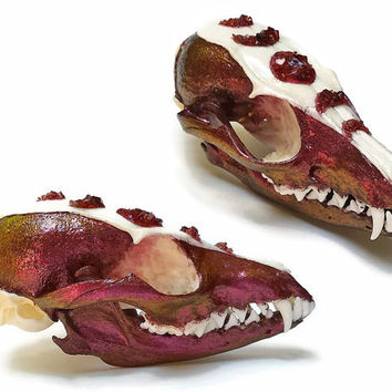 Gray Fox Skull - Fox Skull - Animal Skull - Taxidermy - Animal Bones - Lunar Phases Skull - Crystallized Skull - Blood Moon