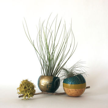 Air Plant Planter Duo with Air Plants  -  Teal, Gold & Lime