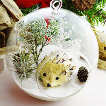 Hedgehog Terrarium on Snow White Sand with Airplant - Glass Round Globe ~ Magical ~ Miniature Garden ~ Gift ~ Ages 3 - 103