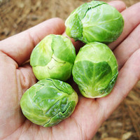 200 Brussel Sprouts Vegetables Seeds Long Island Improved Survival Garden Heirloom NON-GMO Seeds Plants Home DIY Decor