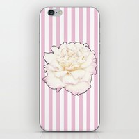 Pale Rose on Stripes iPhone Skin by drawingsbylam