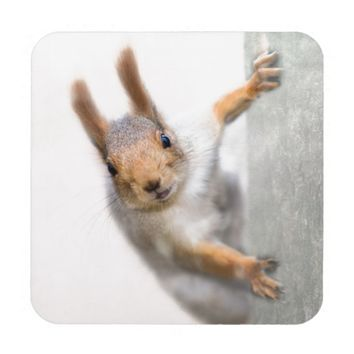 Curious squirrel coaster