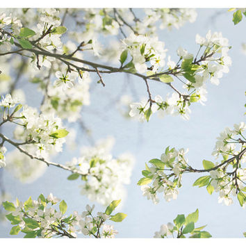 Cherry Blossom Art flowers photography - living room decor - pastel baby blue white wall art print - spring home decor - Nature photography