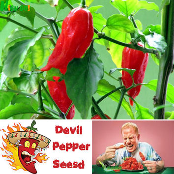 Rushed Sales !! Indian Premier Devil Pepper Seeds Of Terror Spiciness, Indoor Outdoor Available,chil Rare Perennial Plant