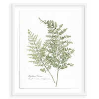 Flat Flower, Mother Fern Asplenium, Mixed Media