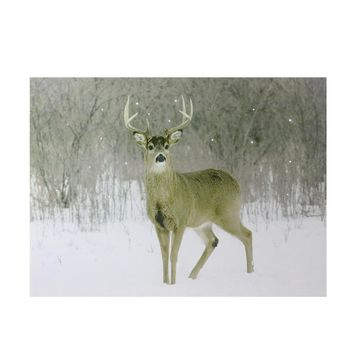 "Fiber Optic Lighted Majestic Buck Canvas Wall Art 12"" x 15.75"""