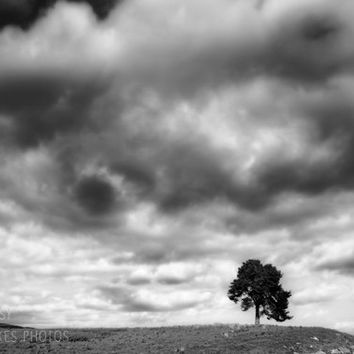 Black and white canvas art, tree canvas, landscape photography, nature decor, fine art photography, framed print, oversized art, dramatic