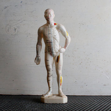 Vintage Anatomy Model, Medical, Acupuncture Points