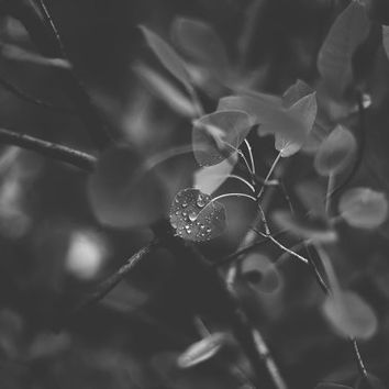 Black & White, Macro Photography, Nature Photography, Minimalist Photo Art, Fine Art Photo Prints, Abstract Nature Art, Ethereal Art Prints