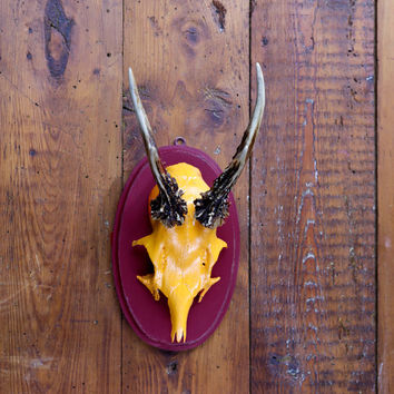 """Stylish wall sculpture, deer antler with scull, deer scull, deer mount, wall decoration, antler hook, antlers,  """"Otto"""""""