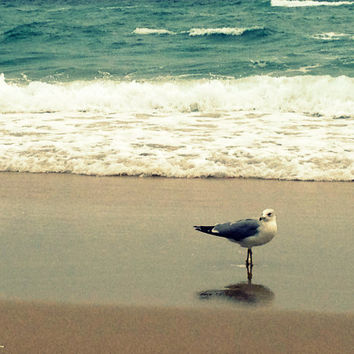 Beach and Seagull Photography. Teal Ocean Waves, Turquoise Sea.