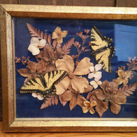 Vintage Framed Butterflies and Dried Flower Specimen Victorian Style
