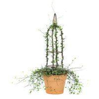 "25"" Angel Vine Tower in Planter, Live, Outdoor Urns, Planters & Jardinieres"