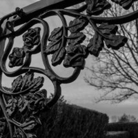 Wrought Iron Gate black iron gate of roses architectural photography by Charlee Fischer  8 x 10 print