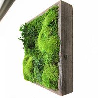 "12""x12"" Artisan Moss Plant Painting- No Care, Moss Wall Art. Real Preserved Plants.  Reclaimed Wood, Moss and Fern"
