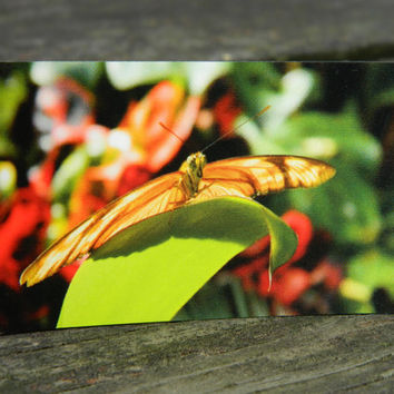 Orange butterfly magnet, photo magnet, butterfly photography, refrigerator magnet, rectangle fridge magnet, nature photo print, insect art