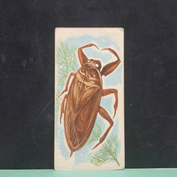 Vintage Insect Giant Water Bug Flash Card Color Illustration Paper Ephemera Art Decor Nature Collage Crafts Supply