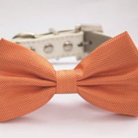 Orange Dog Bow Tie Wedding Collar- Chic and Elegant