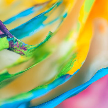 Abstract Rainbow Photography Decor | Zen Painted Colorful Rose Petals | Home Office Bedroom Bathroom Decor