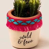 Wild And Free Succulent
