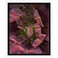 Offset for west elm Print - Tulip II by The Licensing Project