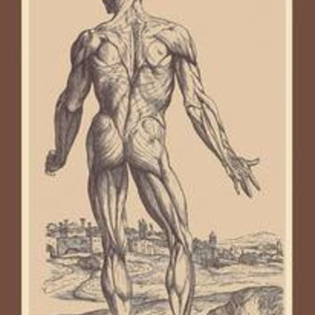 Ninth Plate of the Muscles: Fine art canvas print (12 x 18)
