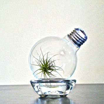 Air Plant Light Bulb Terrarium, Airplant Lightbulb Glass Terrarium, Repurposed Lightbulb Air Plant Terrarium Repurposed Light Bulb Terrarium