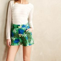 Hesperides Petite Shorts by WHIT Two Green Motif