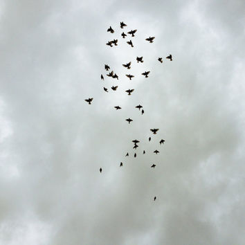 Free Birds // 5x5 Color Photograph by heysp on Etsy
