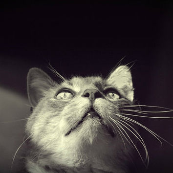 Feline Cat Photography gorgeous eyes,kitty lover's gift idea,,Gifts under 25,closeup,whiskers,adorable kitty,black and white,shiny eyes