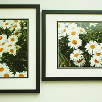 Wall Decor Set of 2 Daisy Photos, Yellow, White, Green, 8x10 Prints, Unique Art, Shabby Chic, Bright Colors, Affordable Home Decor